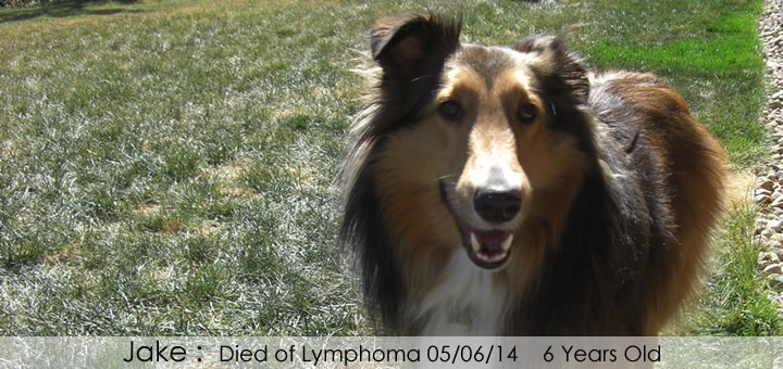 Jake Died of Lymphoma 05/06/14 6 Years Old